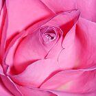Hues of a Rose #5 by Deborah McGrath