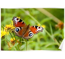 butterfly on a natural background Poster