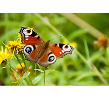 butterfly on a natural background Photographic Print