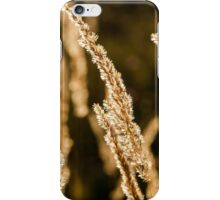 Grass spikelet on the field at sunset iPhone Case/Skin