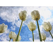 White tulips and cloudy sky digital watercolor Photographic Print