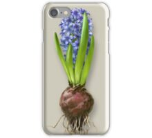 Hyacinthus orientalis in three shades iPhone Case/Skin