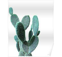 Cactus print Poster