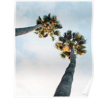 Palms print Poster