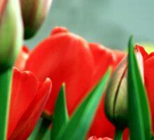 Tulips Sticker