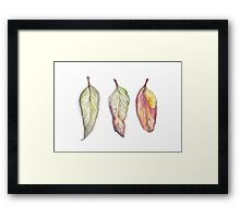 Autumn leaves - wild Australia Framed Print