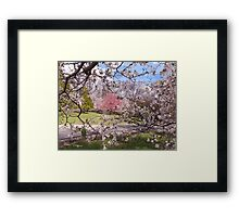 Dogwood Screen Framed Print