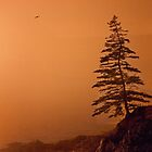 Seaside Lonesome Pine by phil decocco
