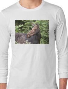 Moose close-up - Algonquin Park T-Shirt