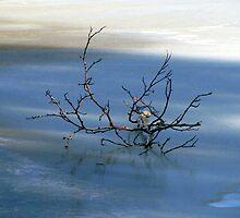 Blue Zen by Jan Landers