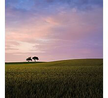 Two trees (evening) Photographic Print