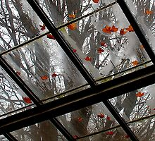 Falling Leaves by David Schroeder