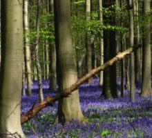 Hallerbos - The Blue Forest - 2 Sticker