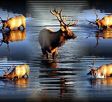 Splish Splash by Jan Landers