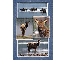 A Day at the Lake (Elk) Photographic Print