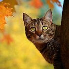 Fall Cat by nightrose0087