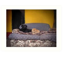 Like Cats and Dogs. Art Print