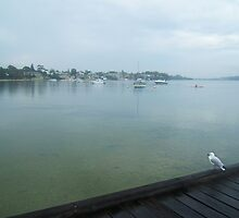 Seagull at Claremont Jetty by Robert Phillips