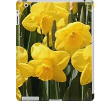 Yellow Daffodil flowers iPad Case/Skin
