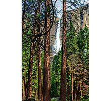 Yosemite Falls appearing through the redwoods Photographic Print