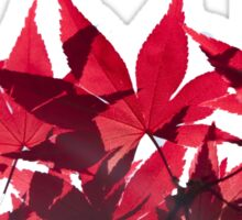 Red Maple Leaves - Oh Canada! Sticker