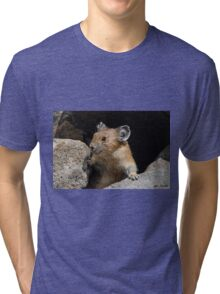 Pika Looking out from its Burrow Tri-blend T-Shirt