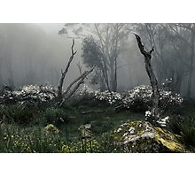Fogscape Photographic Print