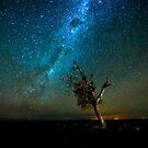 Spotlit under the stars  by David Haworth