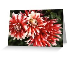 flower-dahlia-red-white-trio Greeting Card