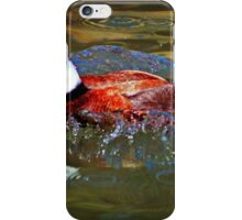White Headed Duck iPhone Case/Skin
