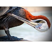 Pelican Itch Photographic Print