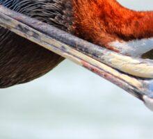 Pelican Itch Sticker