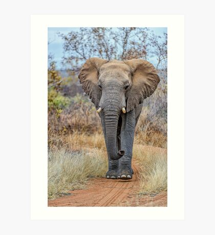 African Savannah Elephant Art Print