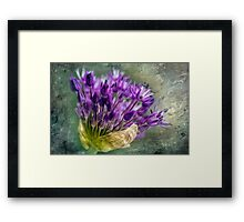 Allium Blossoms Framed Print