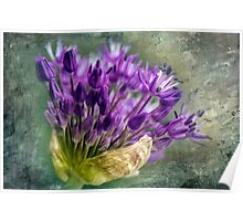Allium Blossoms Poster