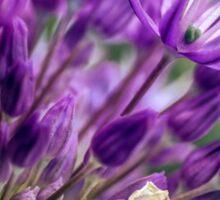 Allium Blossoms Sticker