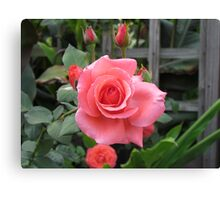 Roses And Buds Canvas Print