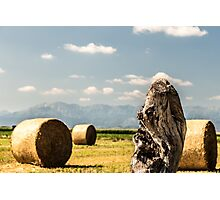hay bale in the fields Photographic Print