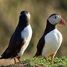 Puffins. by sandyprints
