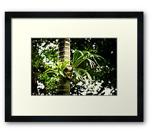 Vibrant Elkhorn in the Raiforest Framed Print