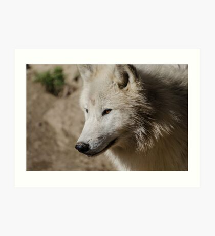From the North - Arctic Wolf Art Print