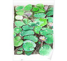 Watercolour - Waterlillies - Eumundi Poster