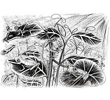 Lemur Leaf Frogs Photographic Print