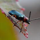 """"""" Bombardier Beetle """" by Richard Couchman"""