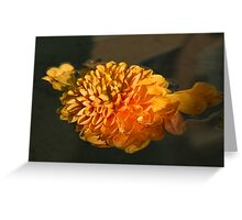Chrysanthemum Gently Floating in the Fountain of Campo de Fiori, Rome, Italy Greeting Card