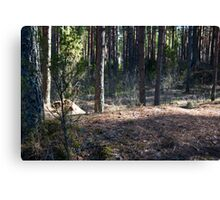 turn field road between the trees Canvas Print