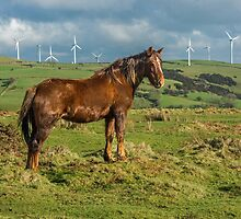 Shiny Brown Horse by Nick Jenkins