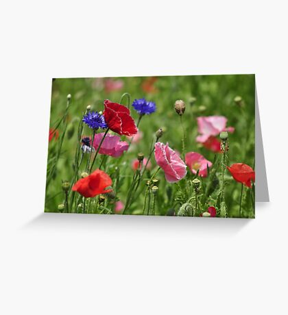 Poppies, As Is Greeting Card