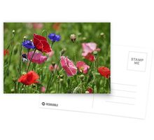 Poppies, As Is Postcards