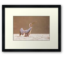 Pelican in the water  Framed Print